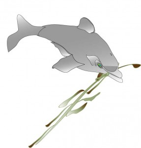 dolphin and seaweed